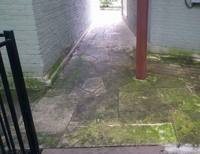 Green algae and moss growing on concrete surface before cleaning.